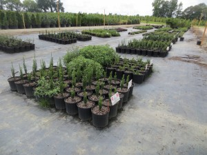 Cover photo for August 8, 2018 Eastern NC Nursery Field Day