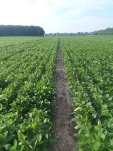 Cover photo for Northeast Ag Expo Soybean Variety Trial Results