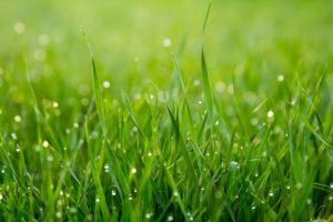 Cover photo for Lawn Management Tips