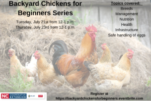 Cover photo for Backyard Chickens for Beginners Series