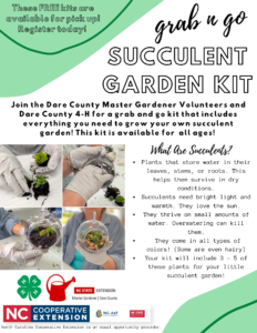 Succulent Garden Kit