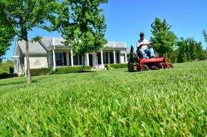 Cover photo for 2021 Virtual Albemarle Area Landscape School